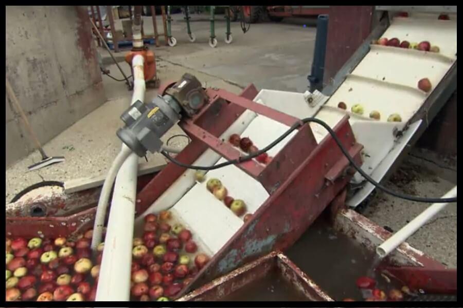 lavar manzanas